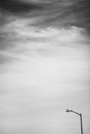 Light POst Pigeon sky
